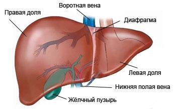 паразиты кишечника человека фото с надписями спереди